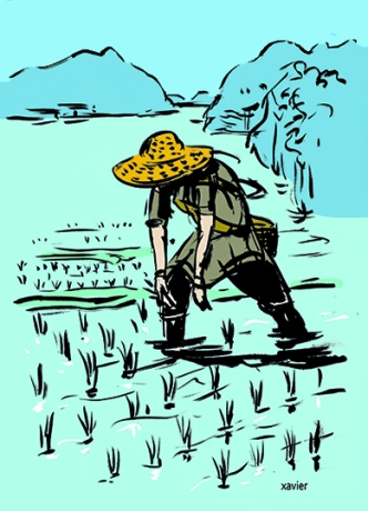Rice culture picage rice field crashes plantation water food tradition Japan riz culture rizière picage plante plantation eau nourriture tradition japon illustration xavier