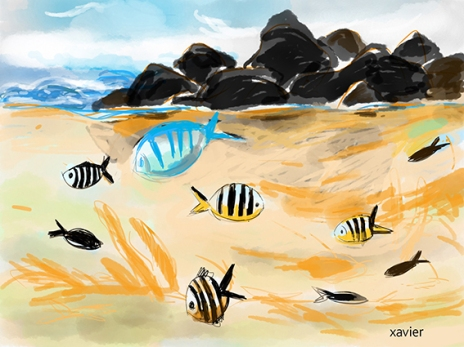 nage dans le lagon des roches noires à ile maurice, dessin xavier, poissons exotiques de l'Océan indien, Swim in the lagoon of the black rocks to Mauritius Island, drawing xavier, exotic fishes of Indian Ocean,