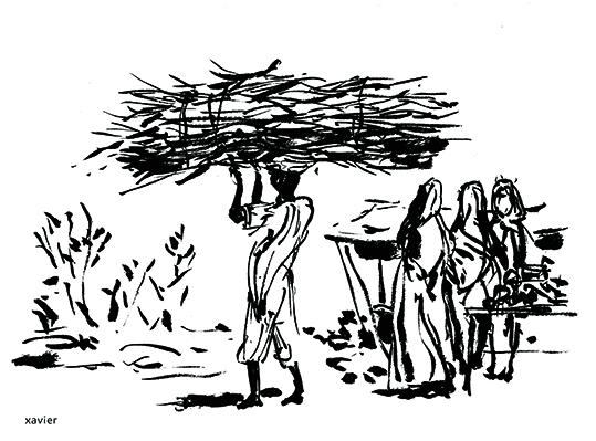Collection radjastan Indian wood, illustration artist ramassage bois radjastan indien, illustration artiste xavier,
